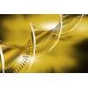 03 декабря — Активации ДНК Изобилия 12 сфер Жизни