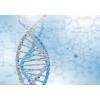09 марта Активация ДНК