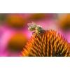 Коллекция фильмов по пчеловодству